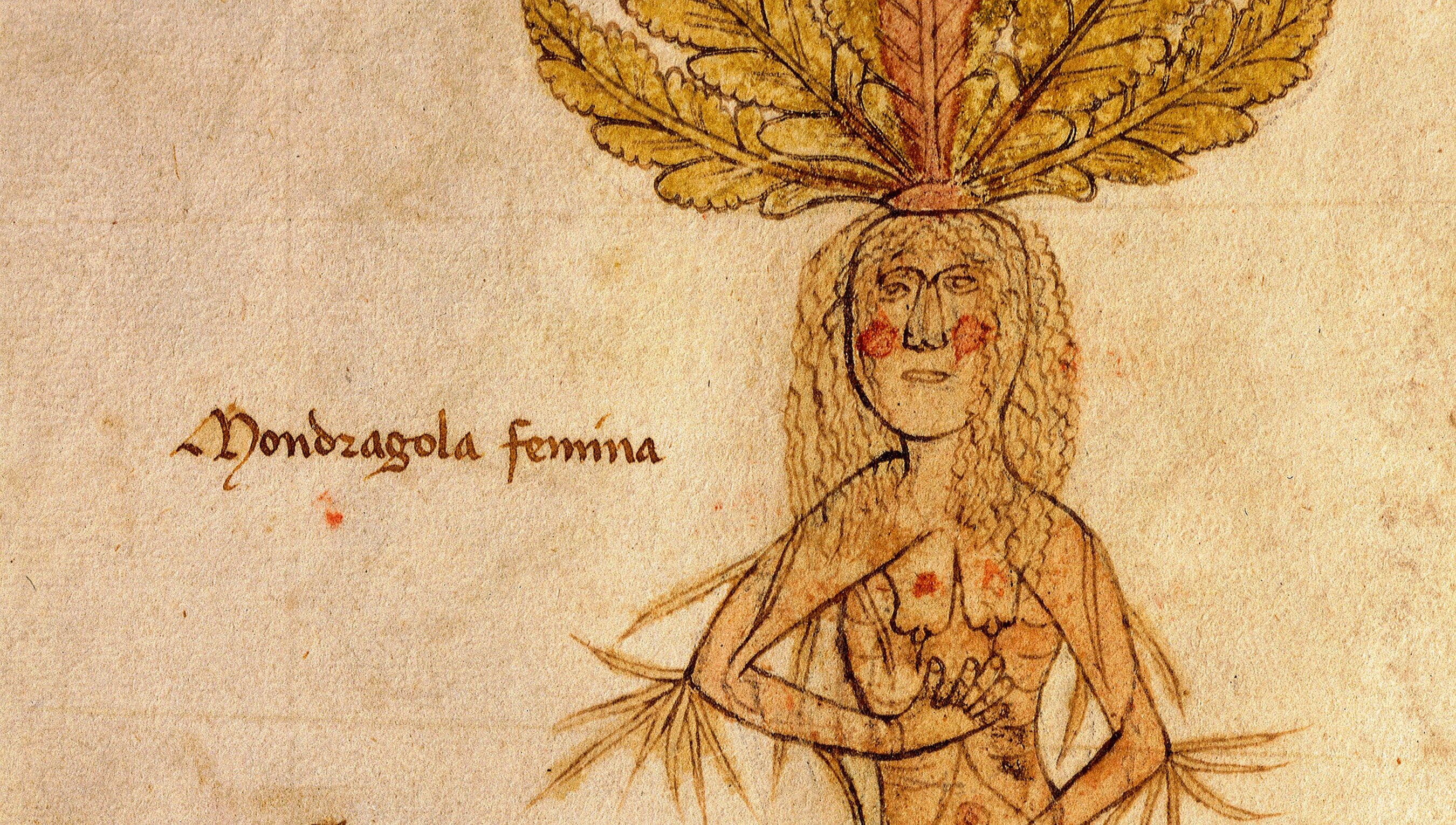 A long history of aphrodisiacs, from health tonic to sexual aid | Psyche